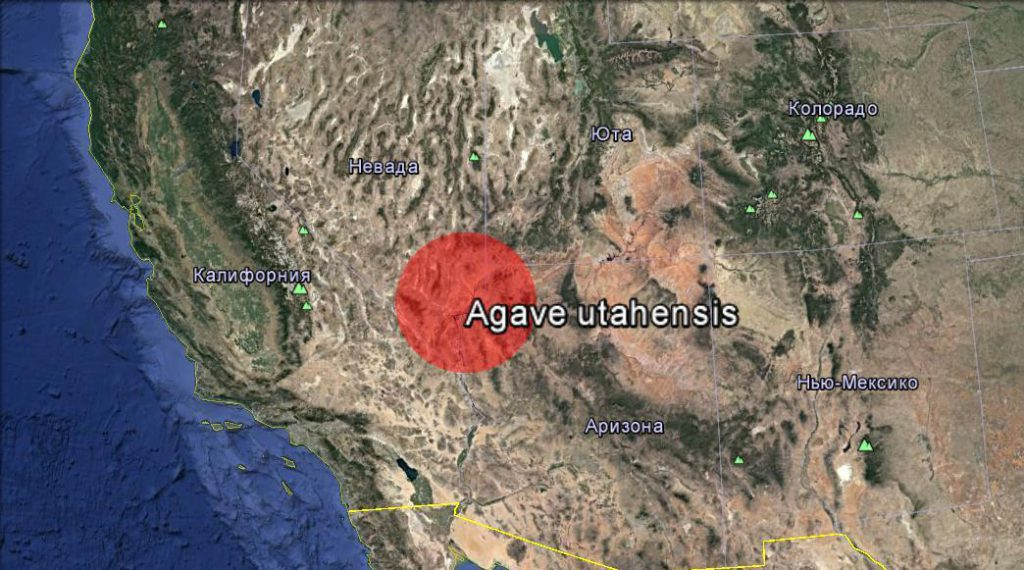 Ареал агава ютская разновидность невадская